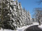 Vogelsberg im Winter